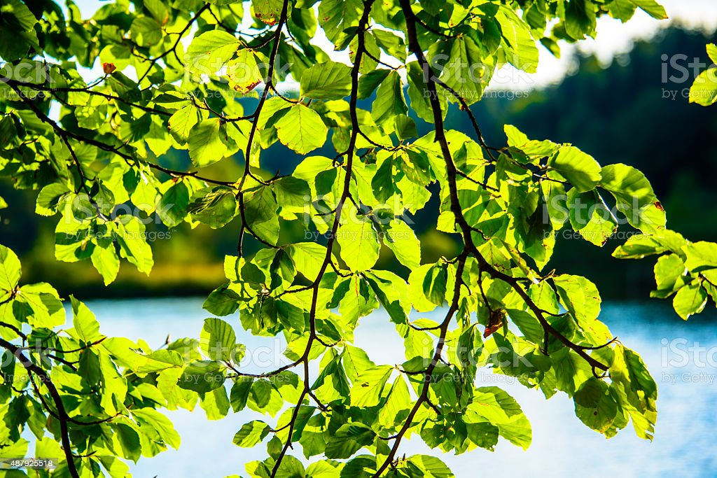 Leaves Above The Water stock photo