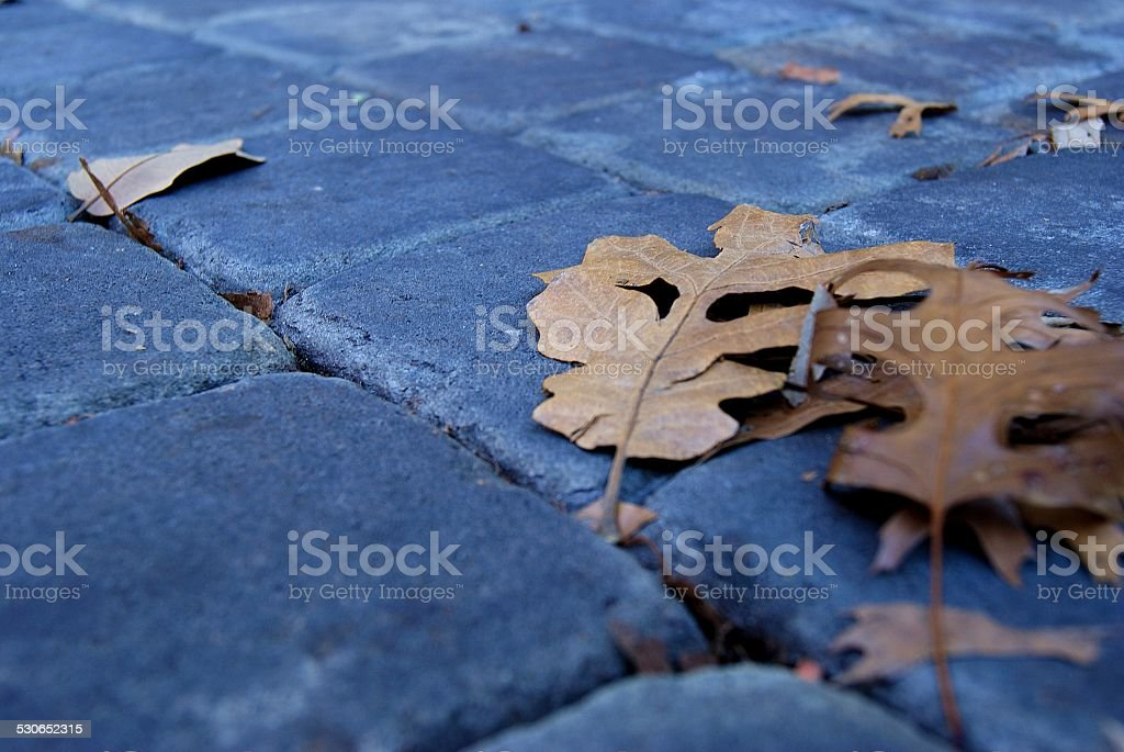 Leaves Across the Cobblestone royalty-free stock photo