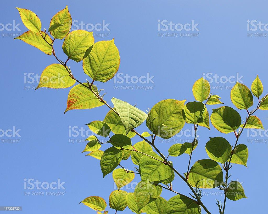 葉と青い空。 ロイヤリティフリーストックフォト