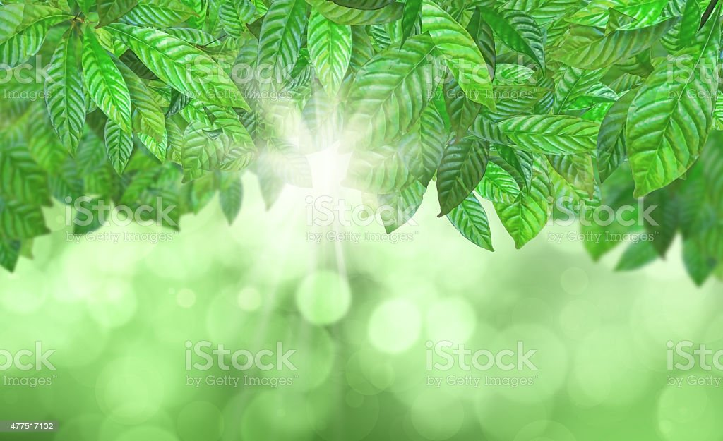 3D Leaves against a defocussed background stock photo