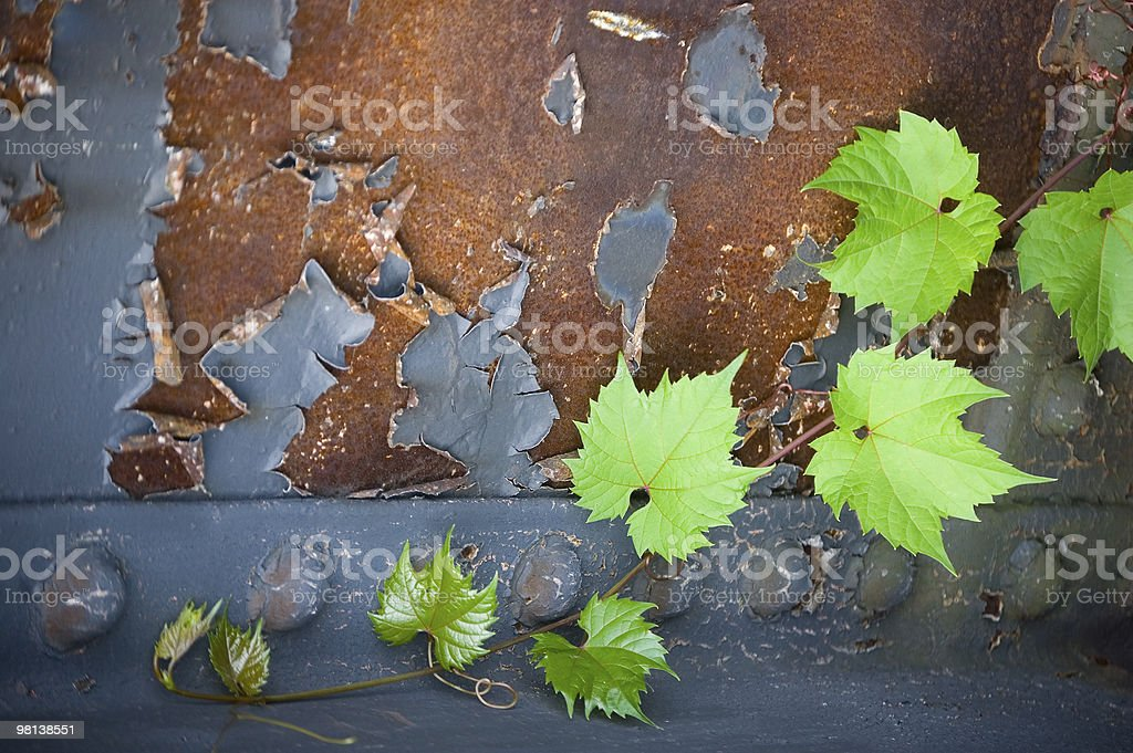 Leaves against rusty background royalty-free stock photo