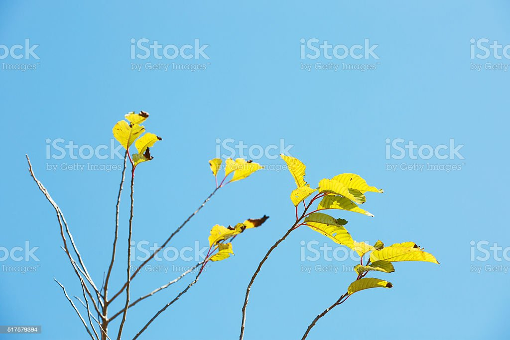 Leaves and blue sky stock photo