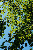 Leaves and branches under blu sky