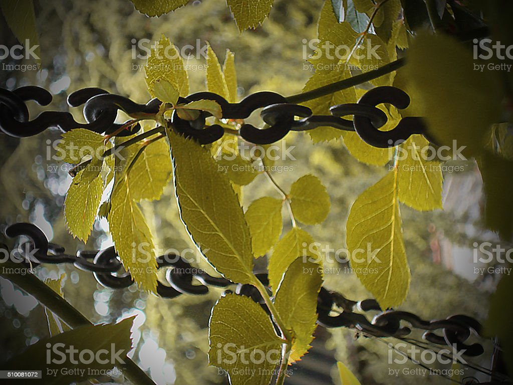 Leaves and chains stock photo