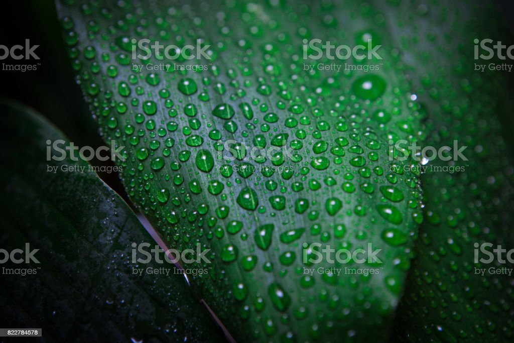 Leaves and drops stock photo
