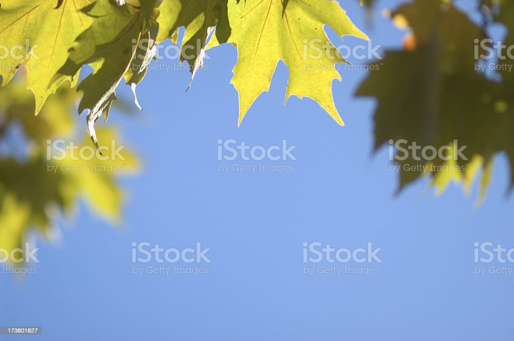 Leaves and Sky royalty-free stock photo