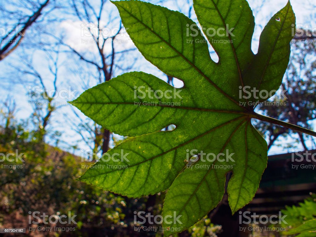 Leaves and sky stock photo