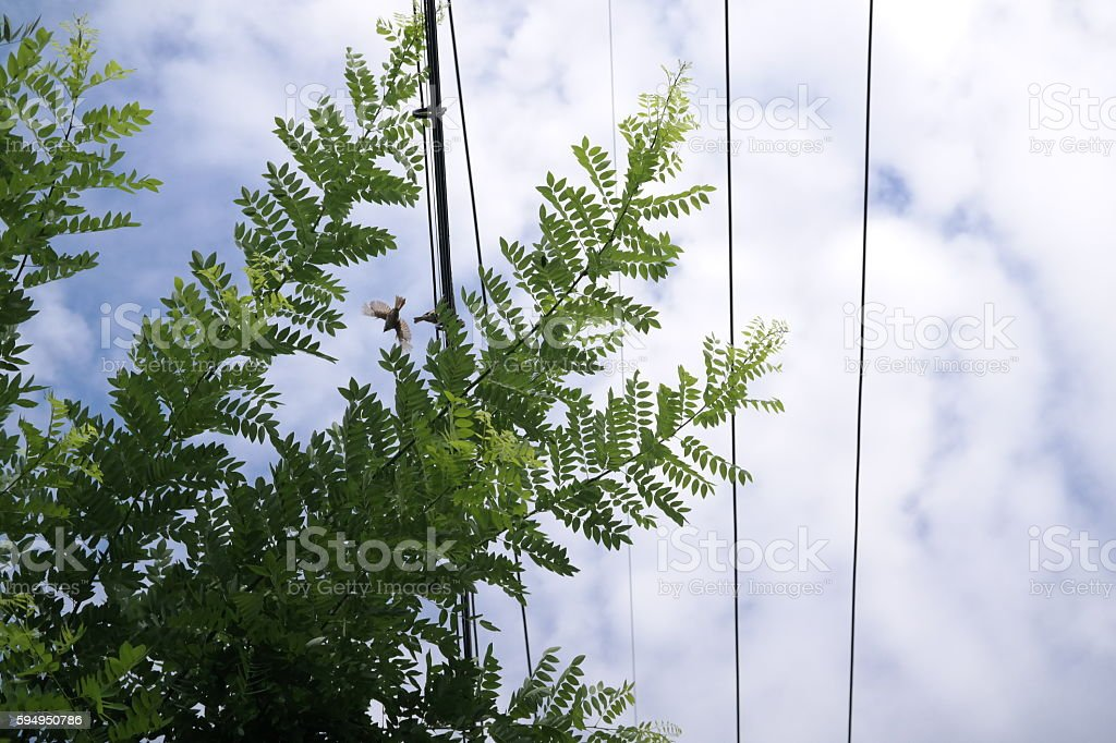 Leaves and the birds and clouds. stock photo
