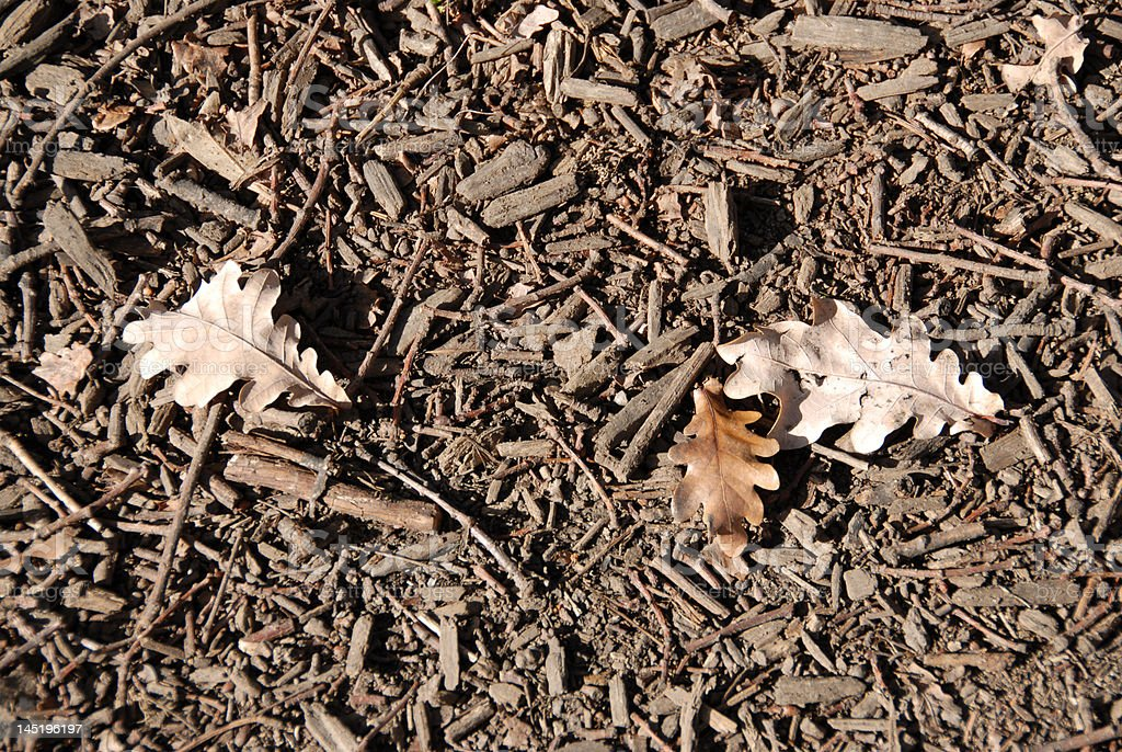 Leaves and twigs royalty-free stock photo