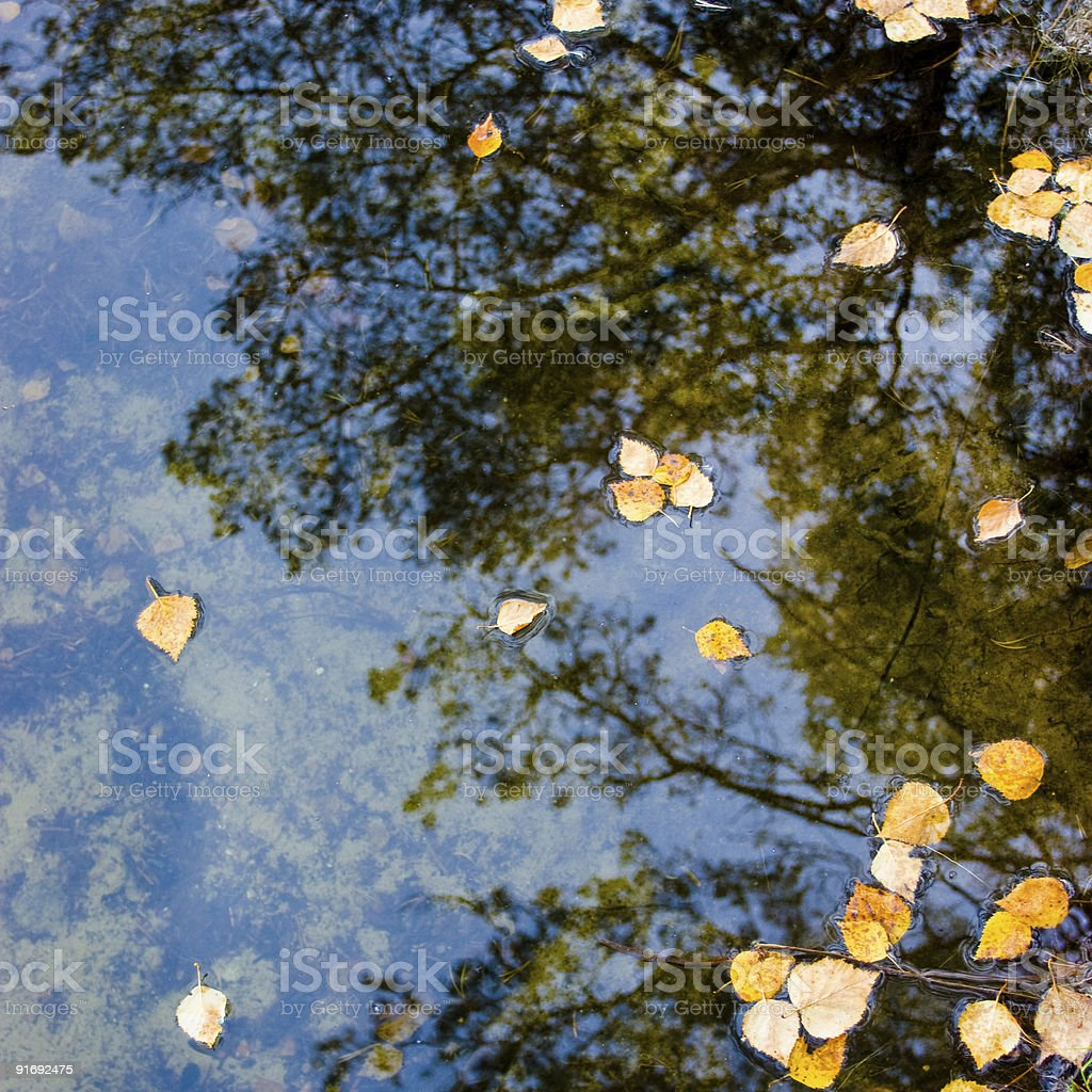 Leaves at water royalty-free stock photo