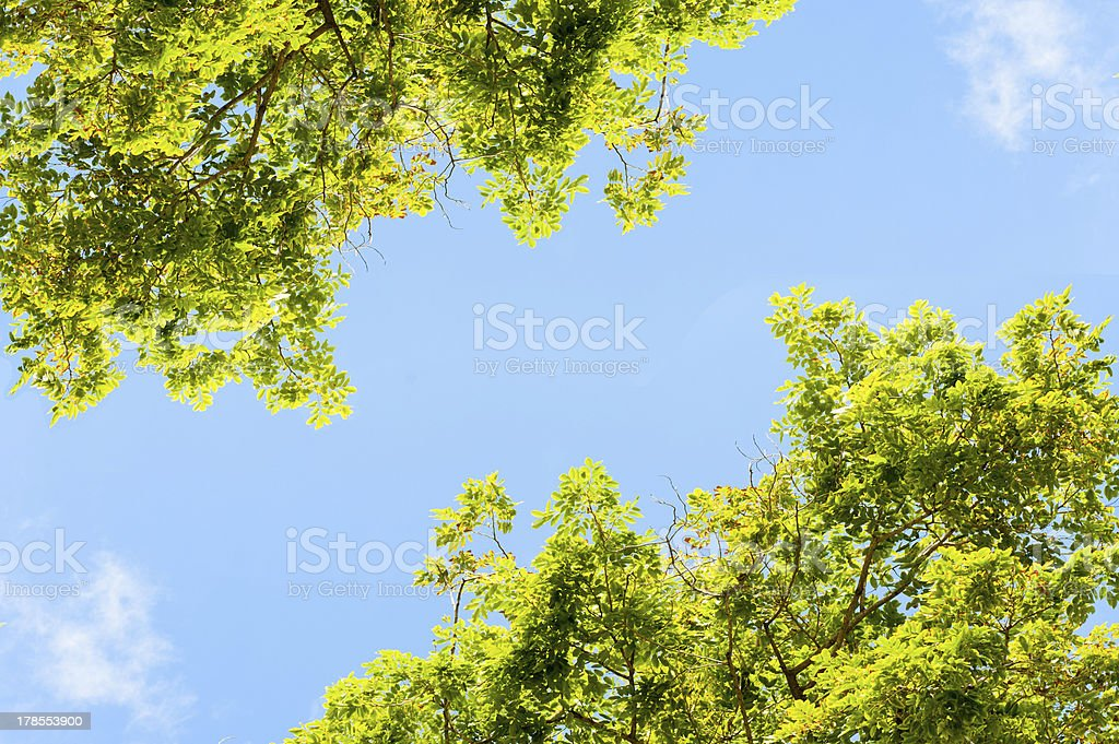 Leaves background royalty-free stock photo