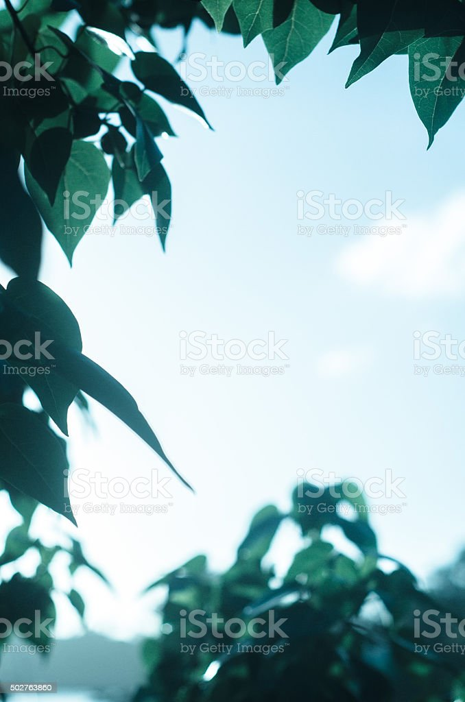 leaves background with copyspace stock photo