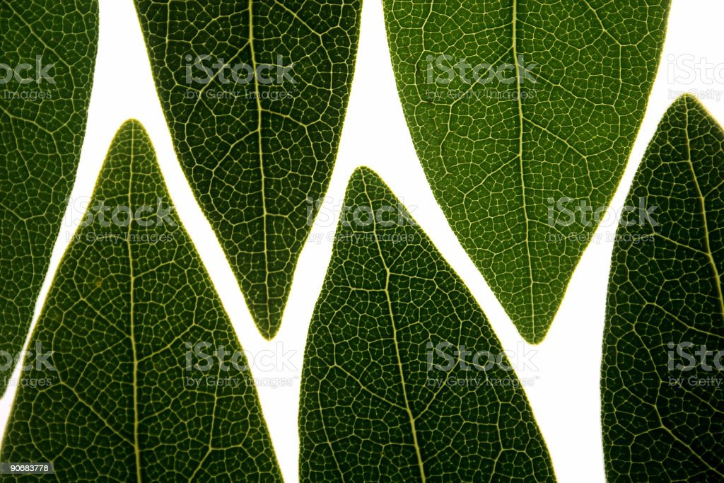 leaves backlit royalty-free stock photo