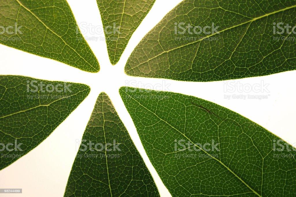 leaves backlit stock photo