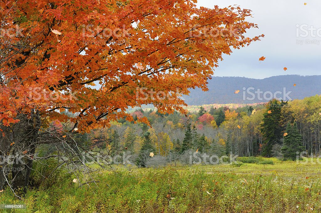 Leaves Blowing in Wind stock photo