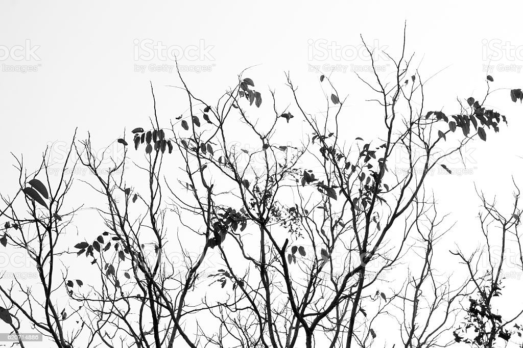 Leaves branch silhouette with black and white style. stock photo