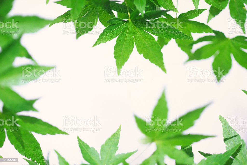 Leaves close up royalty-free stock photo