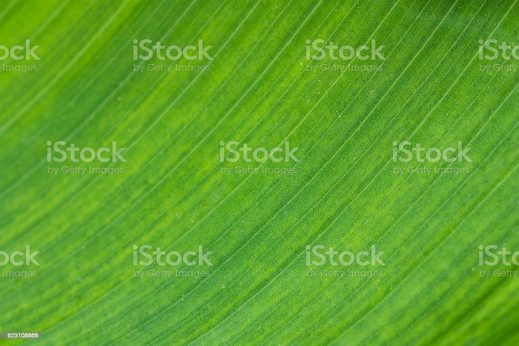 Leaves, close-up stock photo