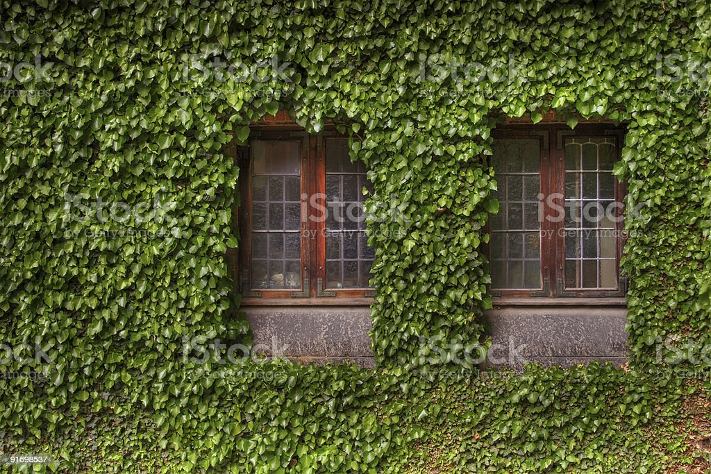 Leaves covered building royalty-free stock photo