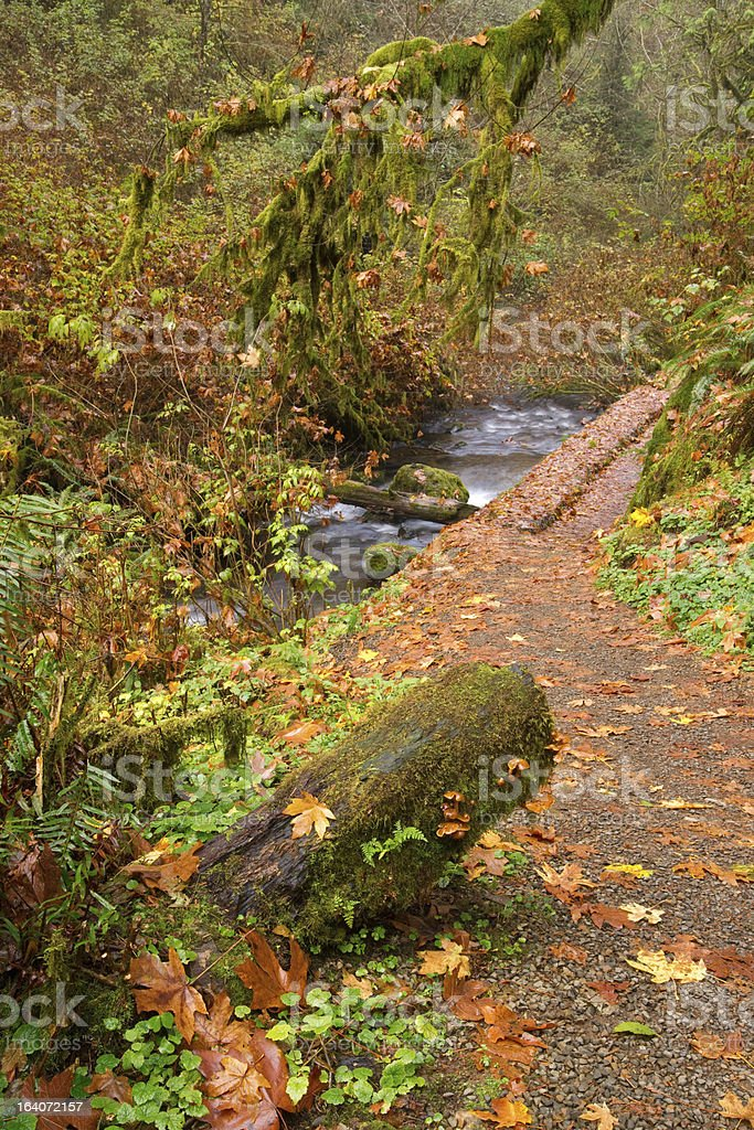 Leaves Fall in Autumn on a Trail to Rainforest royalty-free stock photo