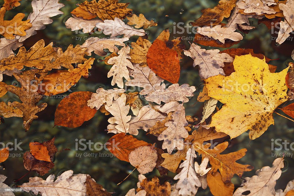 leaves floating royalty-free stock photo