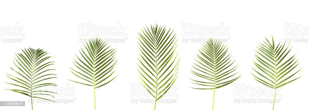 XXL Leaves for picking royalty-free stock photo