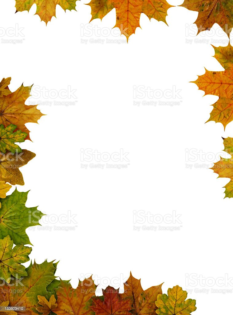 leaves frame isolated on white royalty-free stock photo