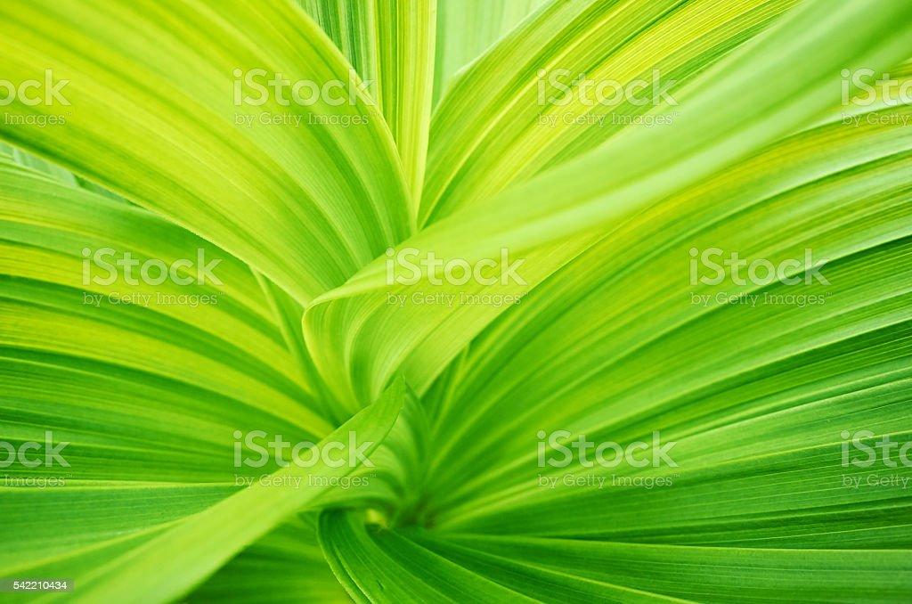 Leaves green macro stock photo