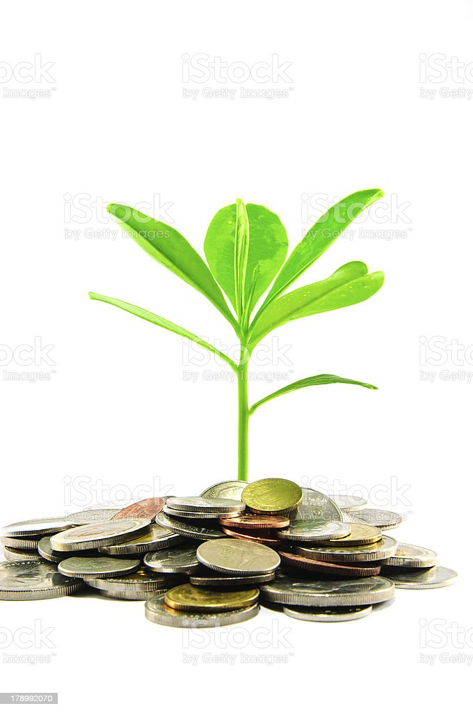 Leaves grow in between coins stock photo