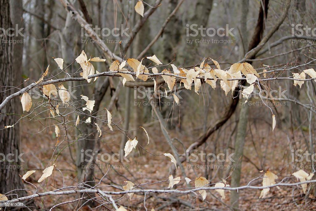 Leaves hanging on stock photo