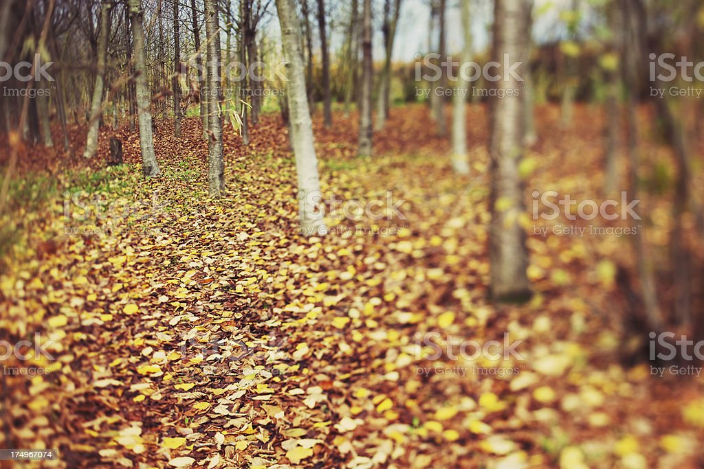 Leaves in a forest royalty-free stock photo