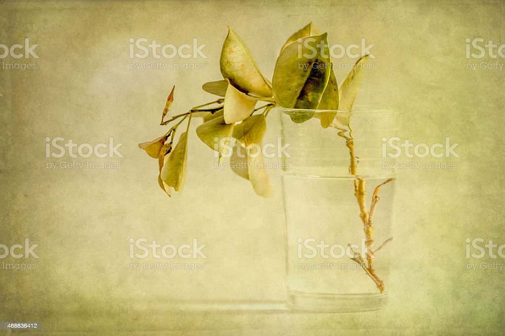 Leaves in a Glass of Water stock photo