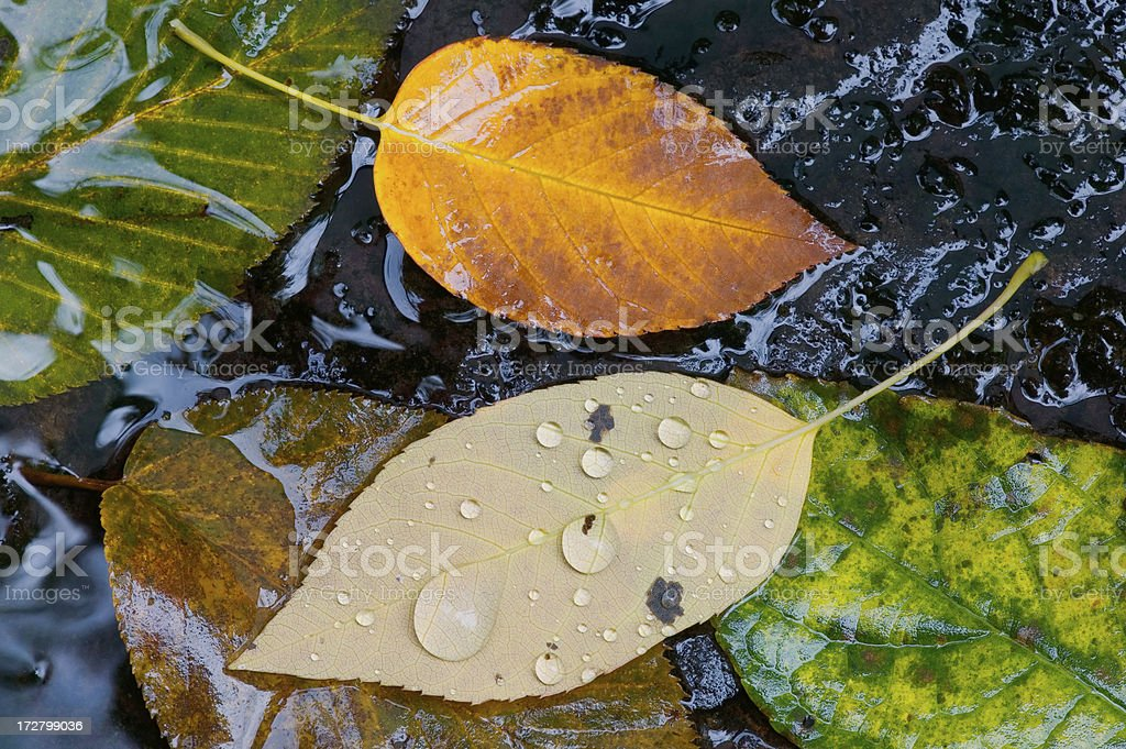 Leaves in a Stream royalty-free stock photo