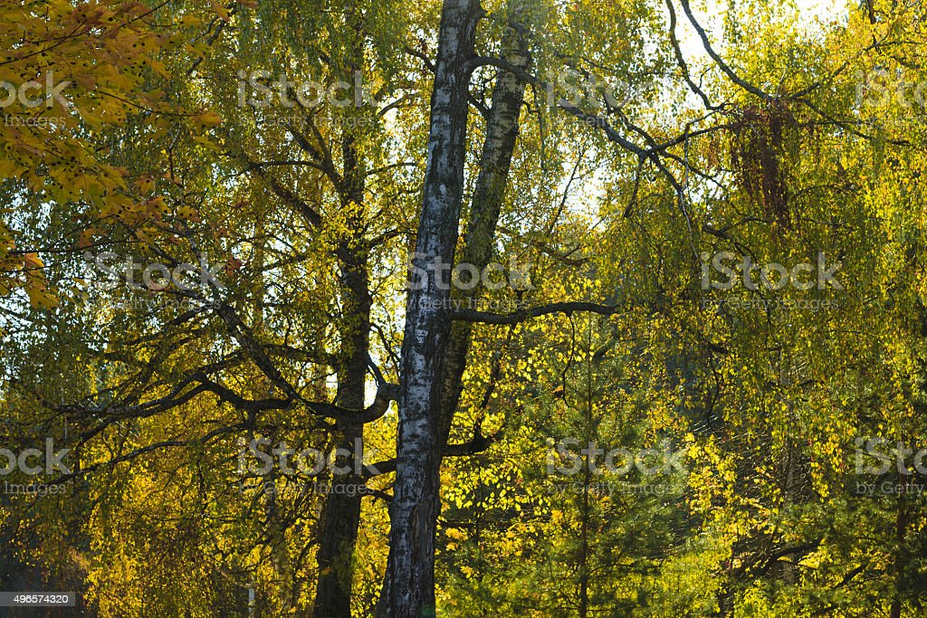 leaves in autumn forest stock photo