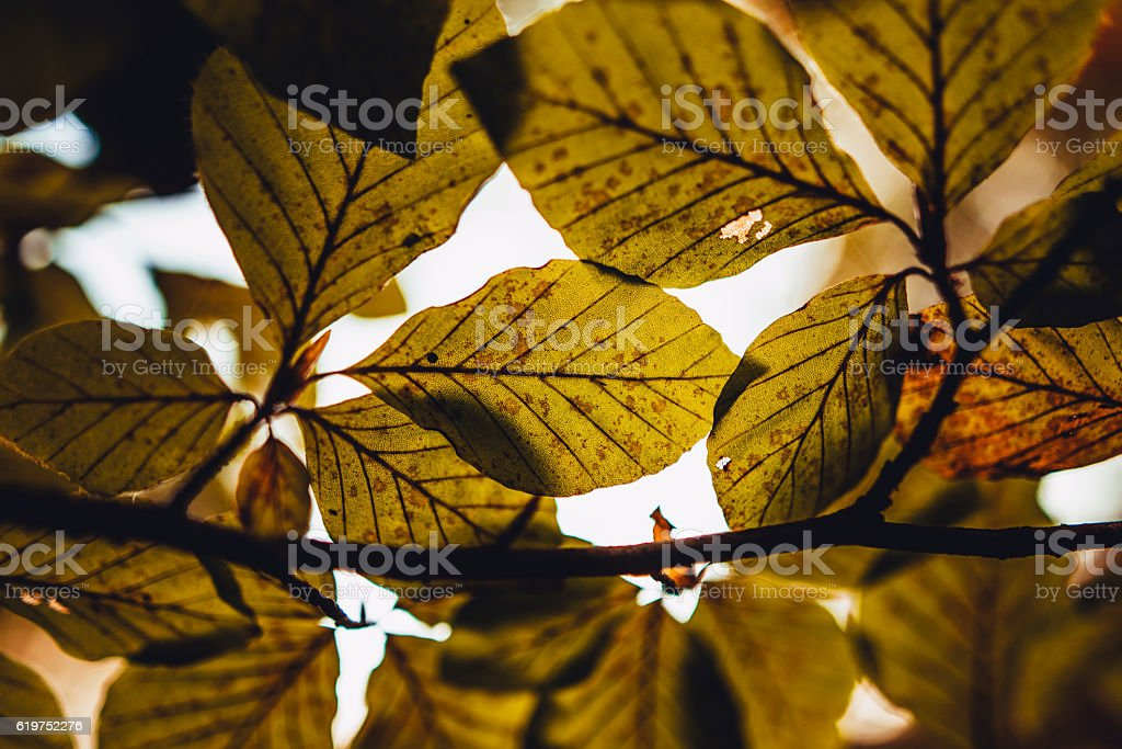Leaves in autumn stock photo