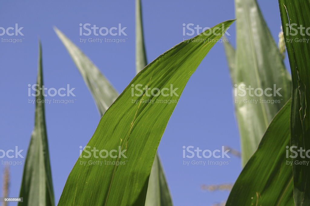 leaves in blue sky stock photo