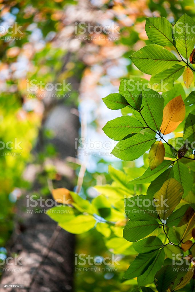 Leaves in Forest stock photo