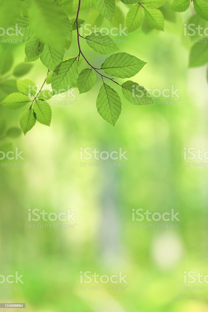 Leaves In The Forest royalty-free stock photo