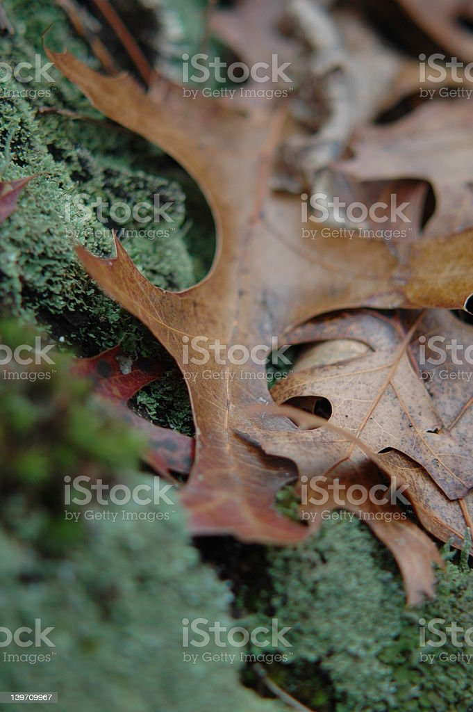 Leaves in the moss royalty-free stock photo