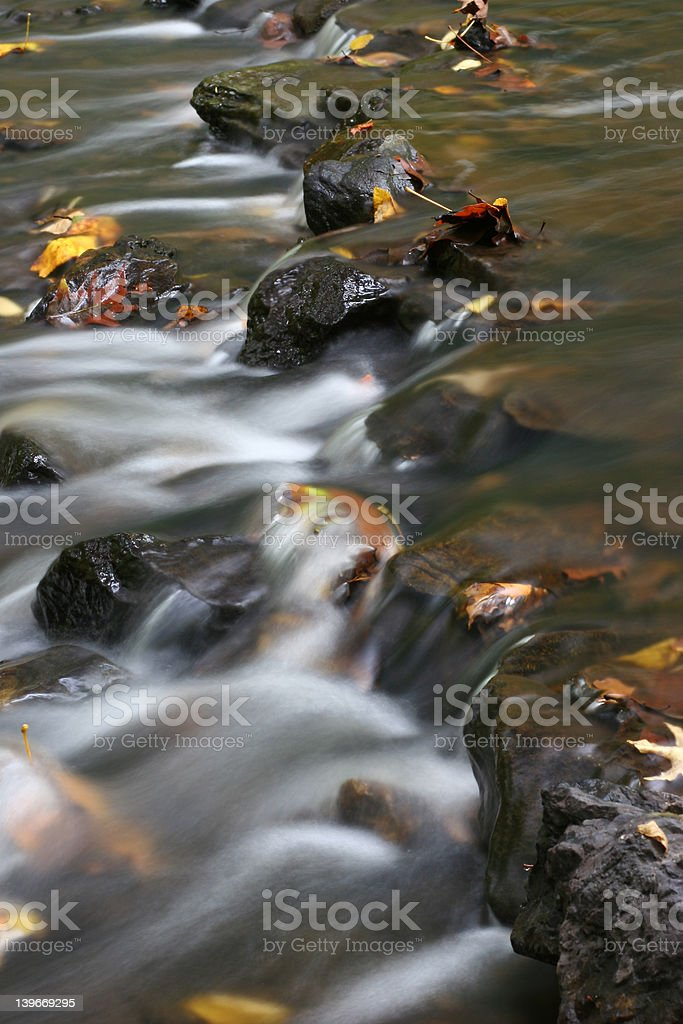 Leaves in the stream stock photo