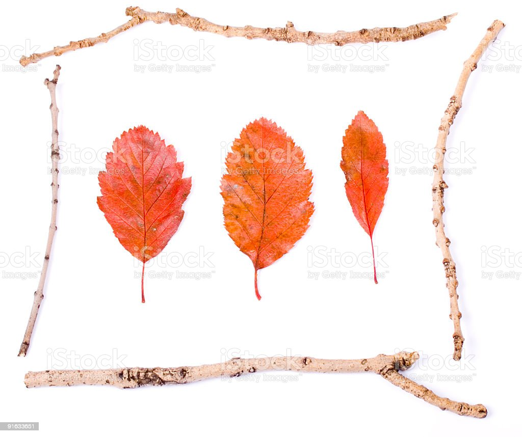 Leaves in twig border royalty-free stock photo