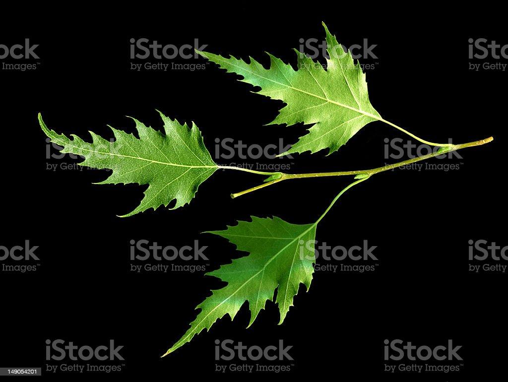 Blätter, isoliert auf Schwarz Lizenzfreies stock-foto