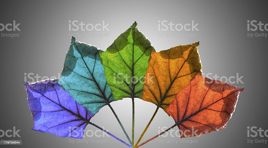 Leaves isolated on gray background royalty-free stock photo