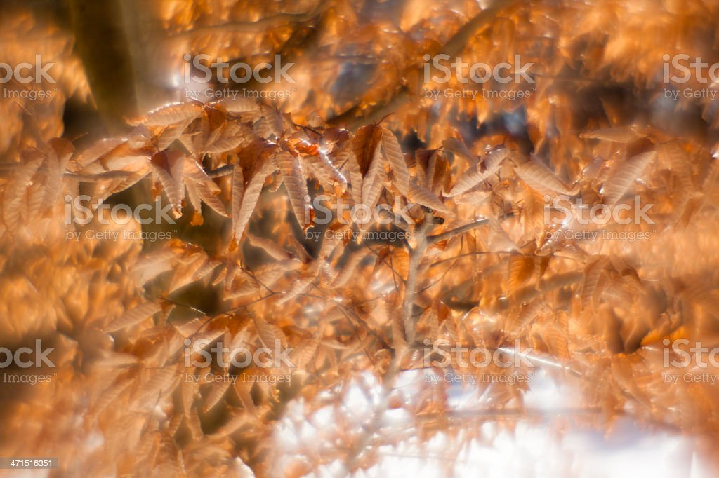 Leaves of American beech on the branches stock photo