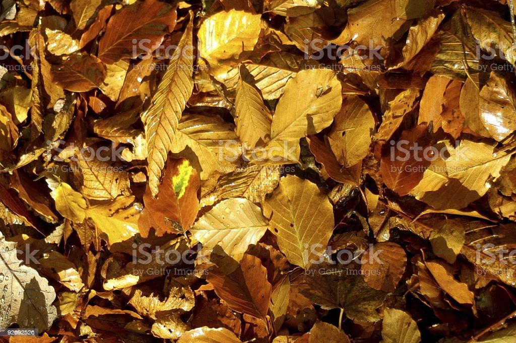 Leaves of Fall stock photo