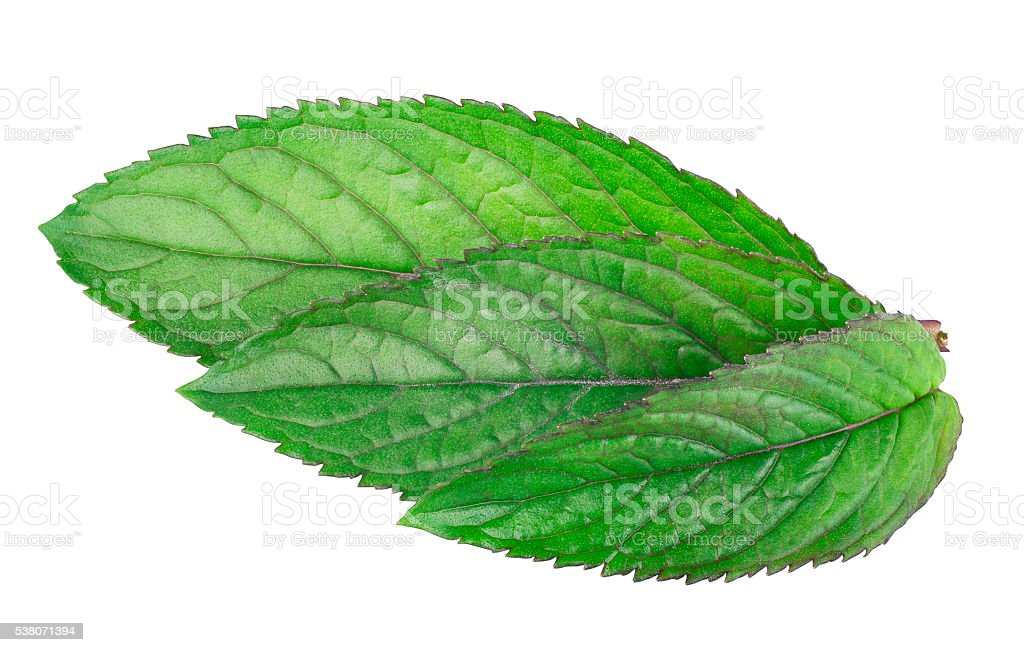 leaves of fresh mint isolated on white background stock photo