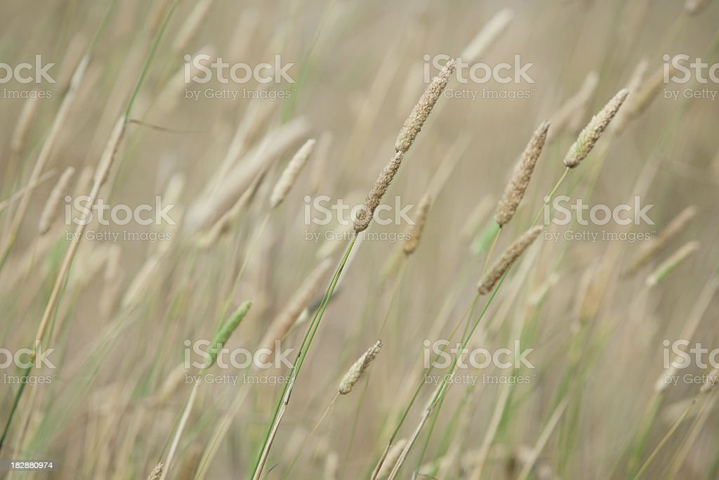 Leaves of Grass stock photo