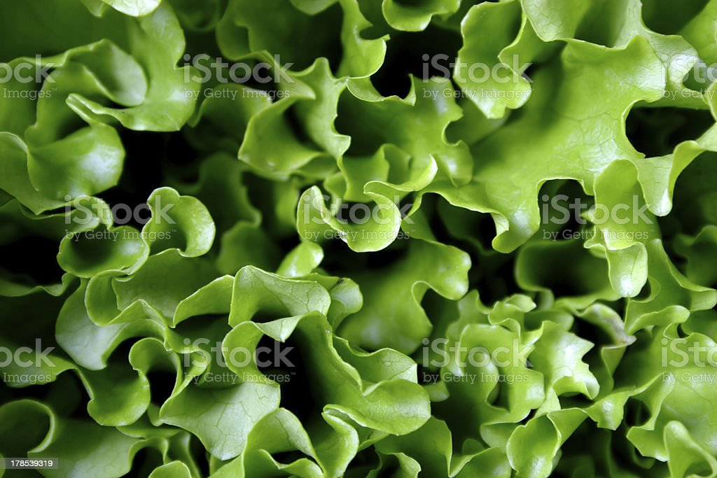 leaves of lettuce stock photo