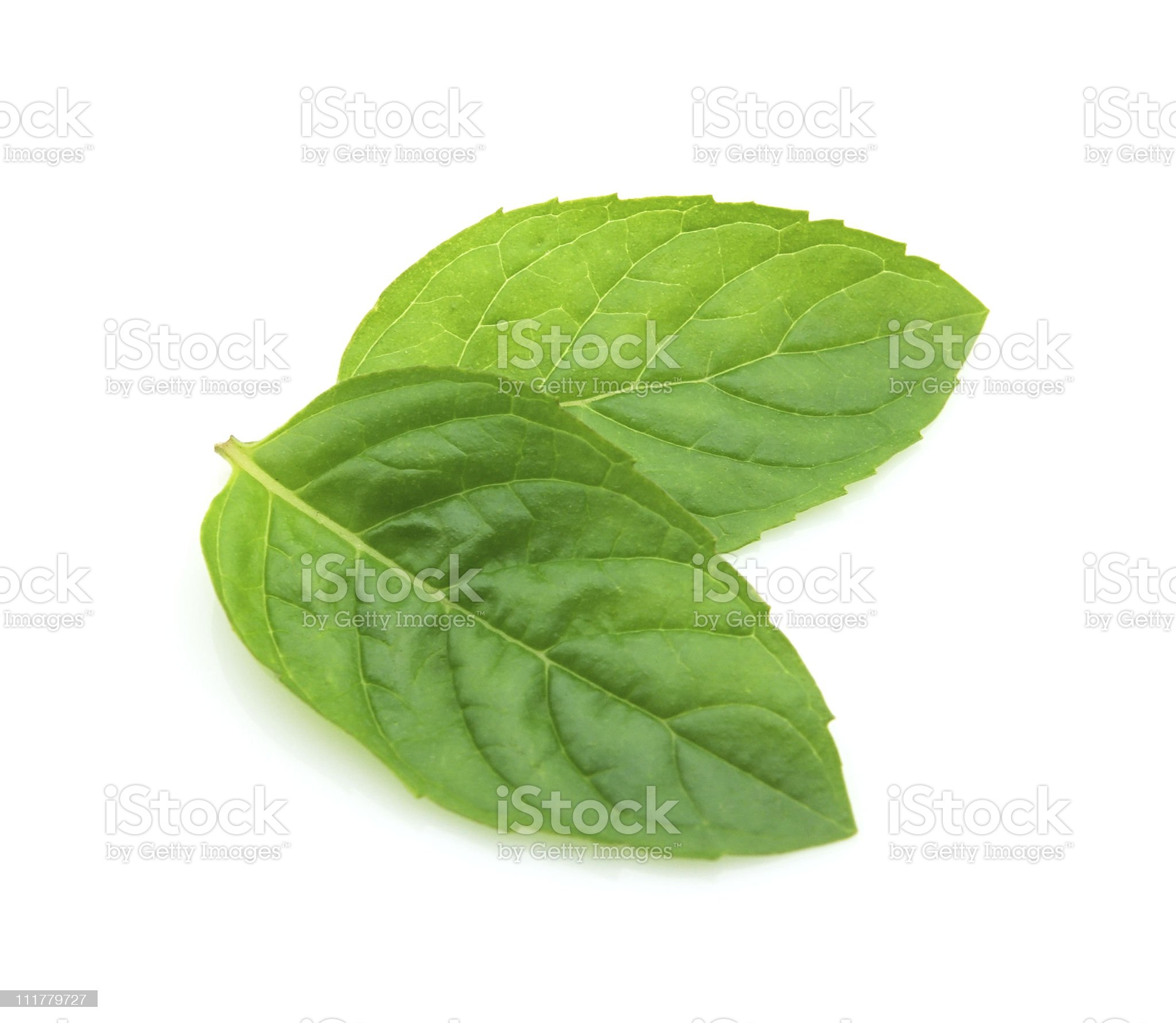 Leaves of mint royalty-free stock photo