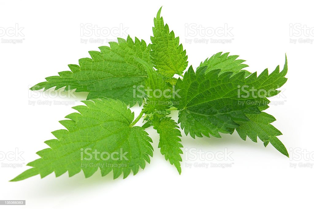 Leaves of nettle stock photo